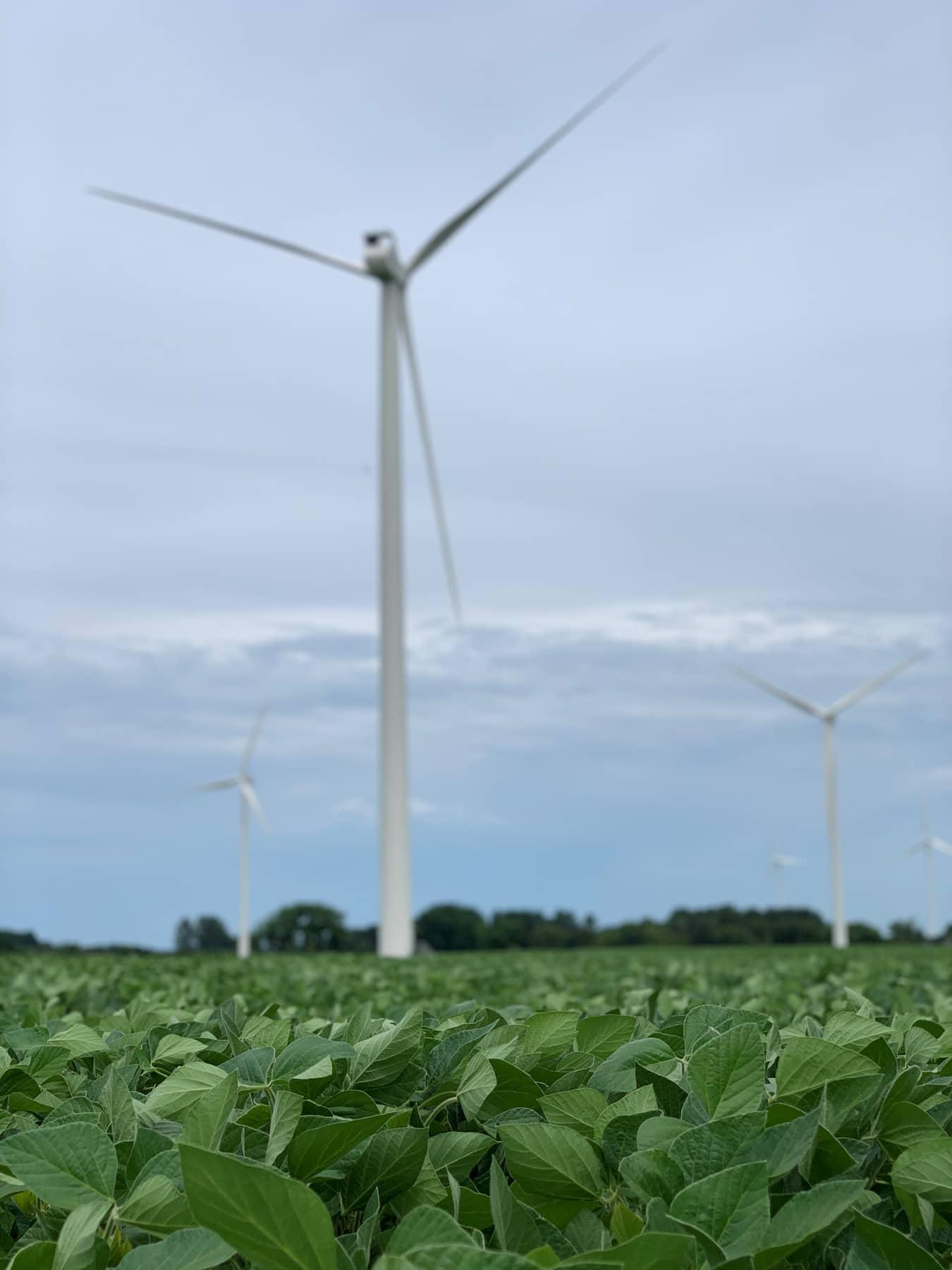 field and wind turbine